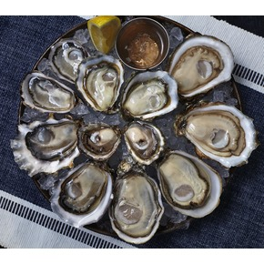 Pure Blue Oyster - 24p